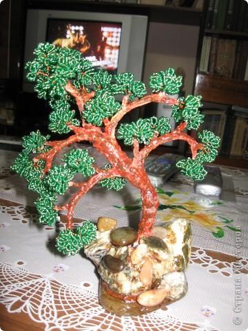 Дерево Бонсай фото 2