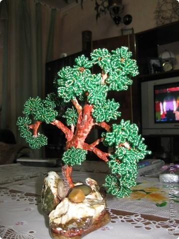 Дерево Бонсай фото 1