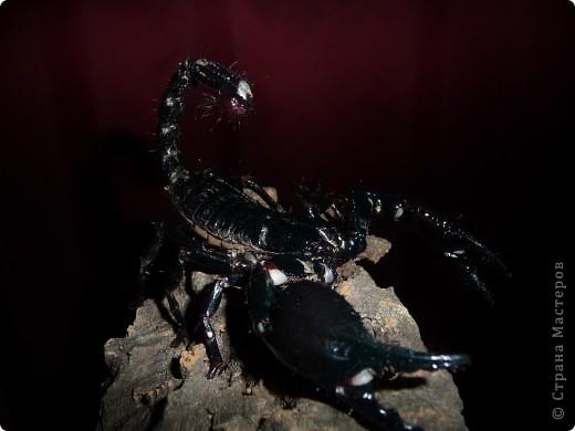 скорпиония фотосессия фото 1