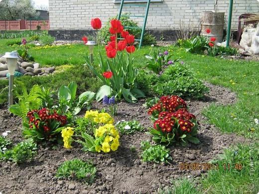 Здравствуйте, Дорогие жители Страны! Очень захотелось поделиться красками Весны с Вами! Любители цветов, я надеюсь, просмотр будет приятным! Спасибо всем кто забежал на огонек! фото 5