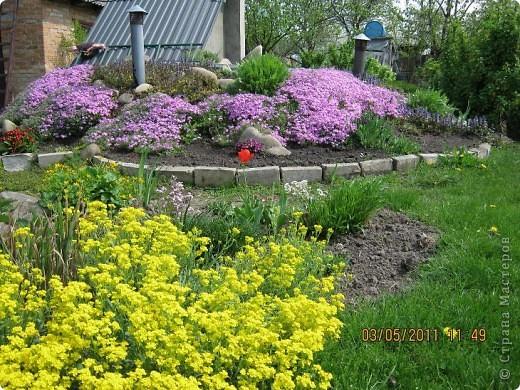 Здравствуйте, Дорогие жители Страны! Очень захотелось поделиться красками Весны с Вами! Любители цветов, я надеюсь, просмотр будет приятным! Спасибо всем кто забежал на огонек! фото 1