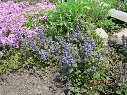 Здравствуйте, Дорогие жители Страны! Очень захотелось поделиться красками Весны с Вами! Любители цветов, я надеюсь, просмотр будет приятным! Спасибо всем кто забежал на огонек! фото 2