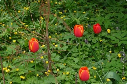 Сначала тюльпанное королевство: фото 2