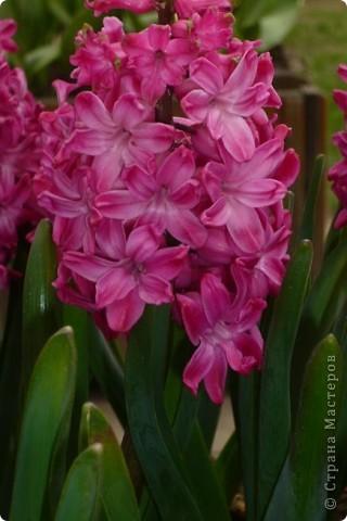 Сначала тюльпанное королевство: фото 10