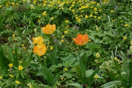 Сначала тюльпанное королевство: фото 5