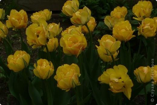 Сначала тюльпанное королевство: фото 6