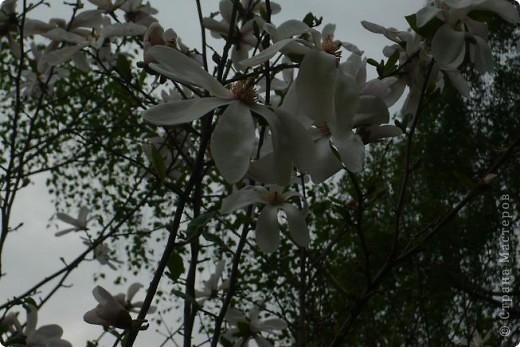Сначала тюльпанное королевство: фото 17