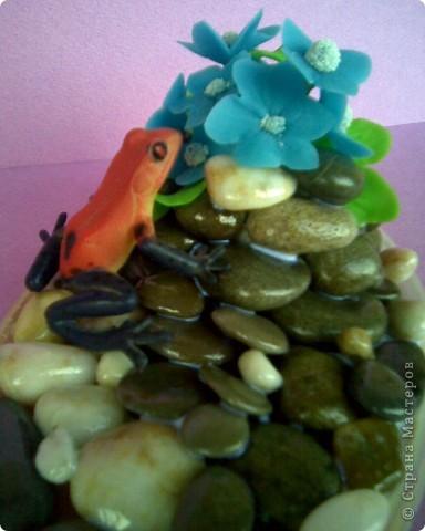 Лягушку умыкнула у сына из игрушек))) фото 1