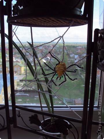 Вот таких насекомых, сплела моя золотуня-Дануся. фото 3