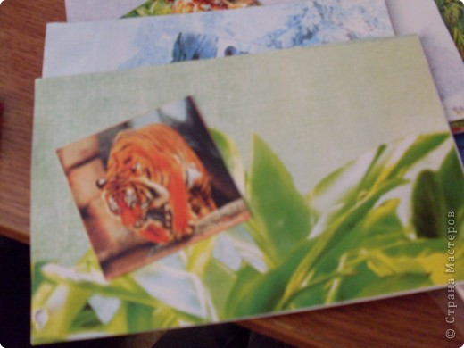 АТС тигр закрыта фото 6