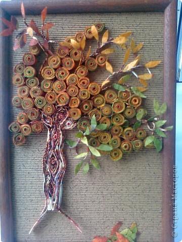 Крона салфеточного дерева
