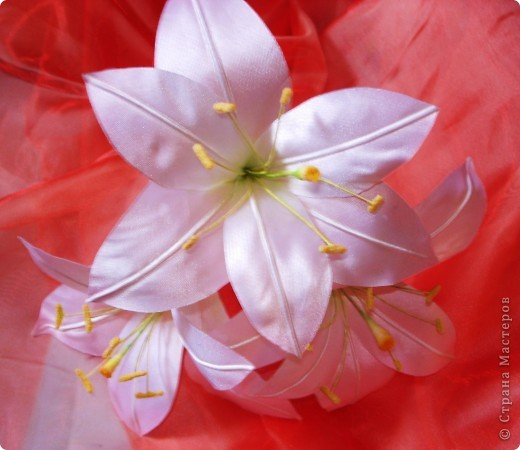 Атласные лилии диаметром около 12 см(если не сильно раскрыты), потом дополню листиками из органзы и розовыми бутонами роз фото 3