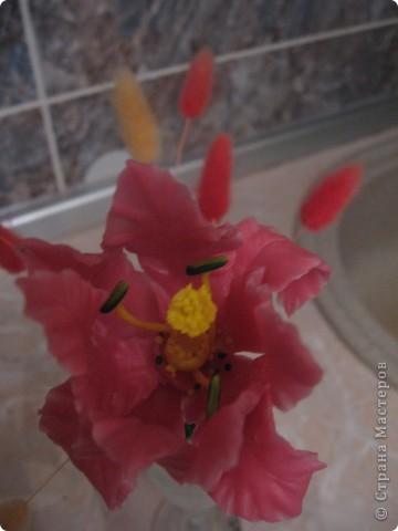 Аленький цветочек. ХФ. фото 2