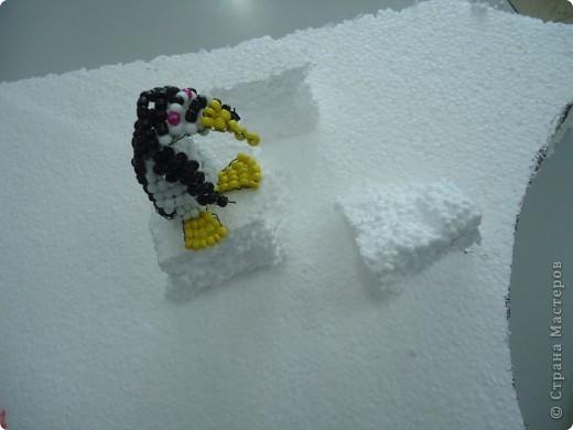 На льдине фото 5
