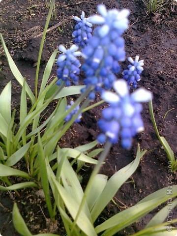 И к нам весна пришла фото 2
