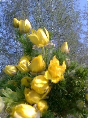 И к нам весна пришла фото 1