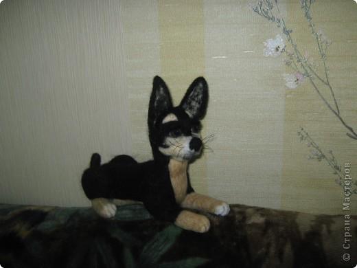 Это моя первая собачка. Зовут её Тина. Сделана в натуральную величину. фото 1