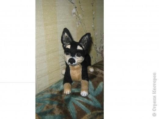 Это моя первая собачка. Зовут её Тина. Сделана в натуральную величину. фото 5
