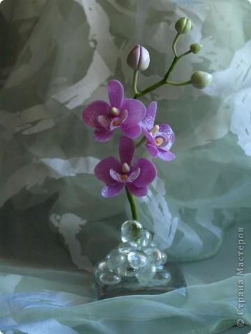 И снова здравствуйте) Хочу показать Вам мою орхидею рода Фаленопсис, слепленную в подарок подруге из самоварного холодного фарфор и тонированную масляными красками (это сказано, предвкушая огромное количество вопросов))))) фото 2