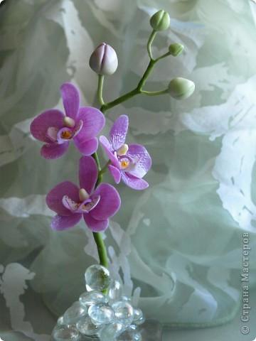 И снова здравствуйте) Хочу показать Вам мою орхидею рода Фаленопсис, слепленную в подарок подруге из самоварного холодного фарфор и тонированную масляными красками (это сказано, предвкушая огромное количество вопросов))))) фото 3