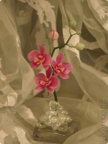 И снова здравствуйте) Хочу показать Вам мою орхидею рода Фаленопсис, слепленную в подарок подруге из самоварного холодного фарфор и тонированную масляными красками (это сказано, предвкушая огромное количество вопросов))))) фото 4