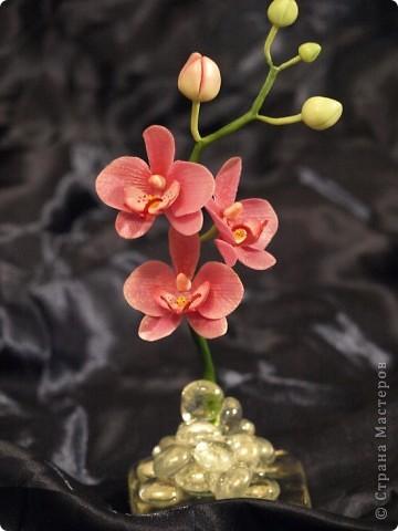 И снова здравствуйте) Хочу показать Вам мою орхидею рода Фаленопсис, слепленную в подарок подруге из самоварного холодного фарфор и тонированную масляными красками (это сказано, предвкушая огромное количество вопросов))))) фото 5