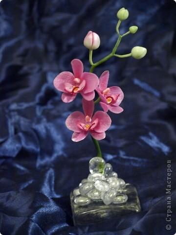 И снова здравствуйте) Хочу показать Вам мою орхидею рода Фаленопсис, слепленную в подарок подруге из самоварного холодного фарфор и тонированную масляными красками (это сказано, предвкушая огромное количество вопросов))))) фото 6