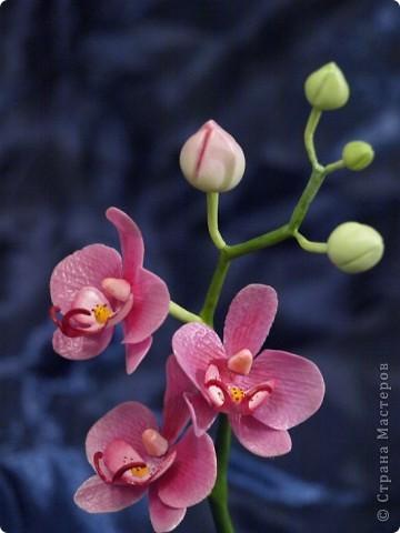 И снова здравствуйте) Хочу показать Вам мою орхидею рода Фаленопсис, слепленную в подарок подруге из самоварного холодного фарфор и тонированную масляными красками (это сказано, предвкушая огромное количество вопросов))))) фото 7