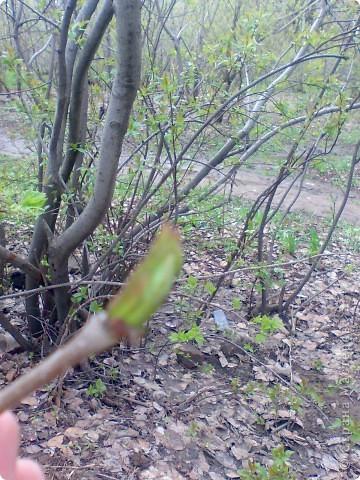 Весна!Весна! фото 1