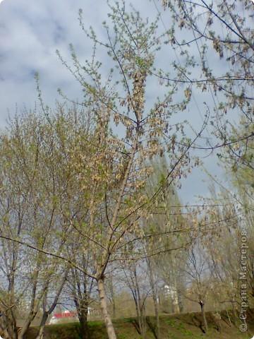 Весна!Весна! фото 2