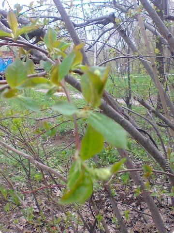 Весна!Весна! фото 5