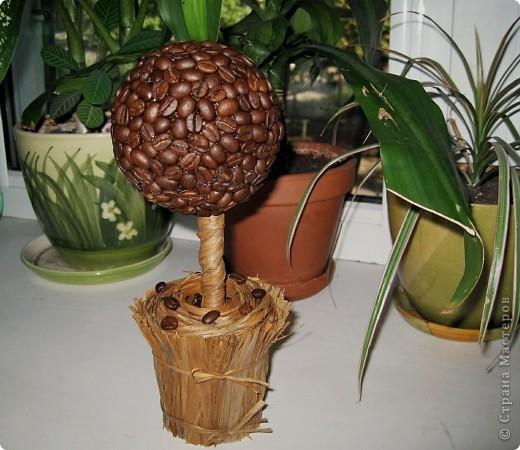 Первое мое кофейное деревце )))