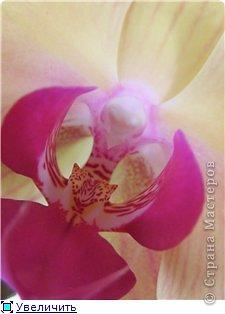 Мастер-класс Лепка МК орхидея Фаленопсис Фарфор холодный фото 54