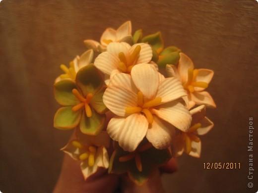 Слепились у меня ещё одни лилии. Теперь в другом цвете.  фото 7