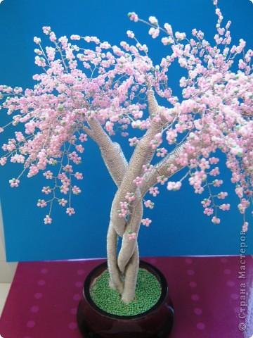 Хочу похвастаться. У меня появилось цветущее деревце. Но автор его не я. Это деревце сделали мой ученик Бурсов Никита и его мама Юлия Олеговна и подарили мне на день рождения.  фото 2