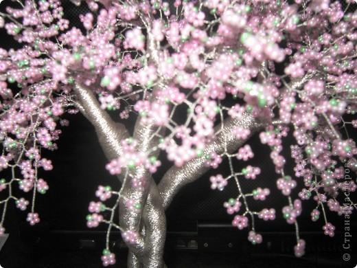 Хочу похвастаться. У меня появилось цветущее деревце. Но автор его не я. Это деревце сделали мой ученик Бурсов Никита и его мама Юлия Олеговна и подарили мне на день рождения.  фото 3