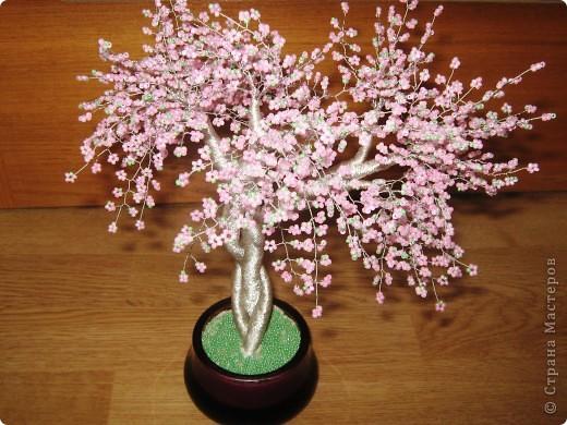 Хочу похвастаться. У меня появилось цветущее деревце. Но автор его не я. Это деревце сделали мой ученик Бурсов Никита и его мама Юлия Олеговна и подарили мне на день рождения.  фото 1