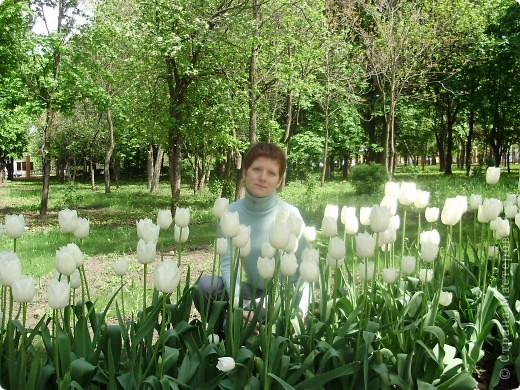 Каждый год в начале мая у нас в городе в дендропарке цветут тюльпаны . Описать эту красоту нельзя , ее нужно видить . Идешь по аллеям , смотришь по сторонам и душа радуется , сразу поднимается настроение . Тюльпаны все разные , глаза разбегаются . Весна -  чудесная  пора  года .Все цветет , буяет и понимаешь , что жизнь прекрасна . фото 1