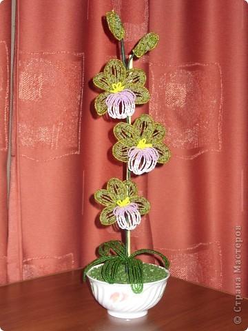 И снова орхидея