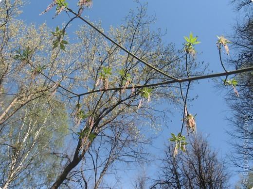 Прогулка по соседнему лесопарку. Фотографировали то, что видели. Это нежные весенние веточки. фото 2