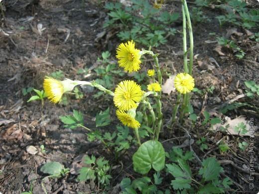 Прогулка по соседнему лесопарку. Фотографировали то, что видели. Это нежные весенние веточки. фото 18
