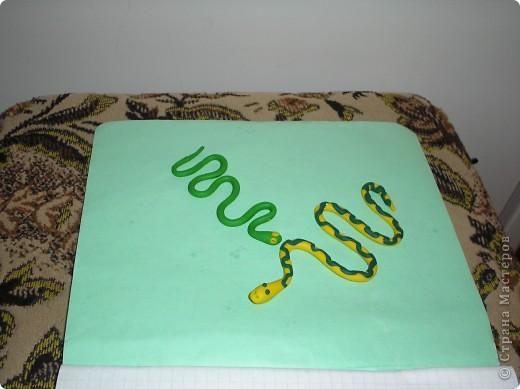 Мои змейки. фото 1