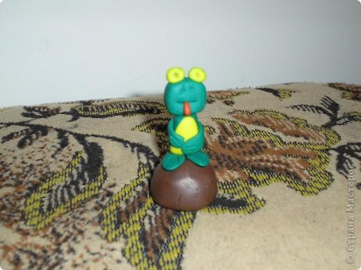 Мои змейки. фото 2