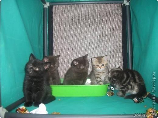 Кот Васёк фото 1