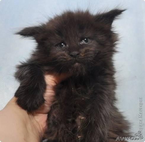 Кот Васёк фото 3
