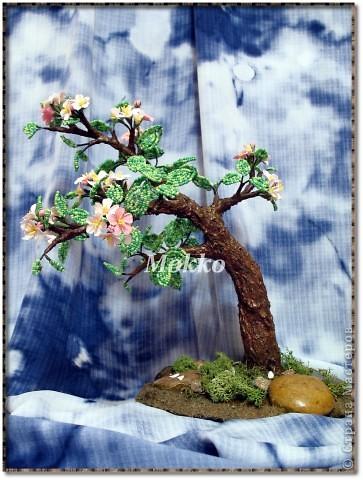 Яблоневый цвет фото 1