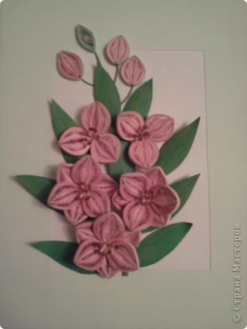 мои цветочки-повторюшки фото 2
