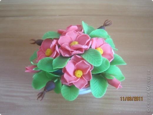Прбовала лепить цветочки из детской массы для лепки фирмы SIWERHOV. Лепить понравилось, результат не очень. Какие-то пластмассовые цветочки получаются, не естественные что-ли... фото 4