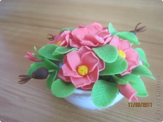Прбовала лепить цветочки из детской массы для лепки фирмы SIWERHOV. Лепить понравилось, результат не очень. Какие-то пластмассовые цветочки получаются, не естественные что-ли... фото 2