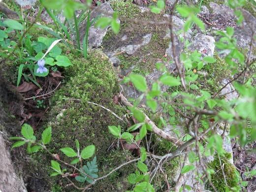 тиссо-самшитовая роща фото 12